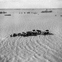 Black and white photograph of a herd of cows caught in a severe flood and surrounded by water