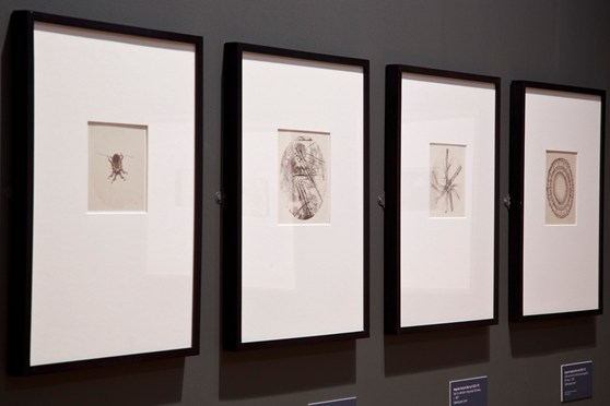 Colour photograph of a section of the Revelations experiments in photography exhibition at the National Media Museum in Bradford