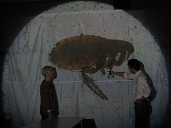 Colour photograph of a solar projection of a mounted flea being shown to an audience via projector