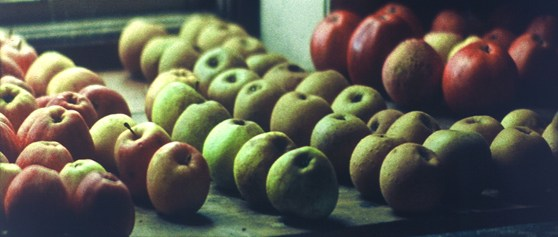 Film still showing colour image of apples on display