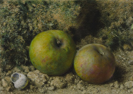 Watercolour painting of two apples and a snail shell