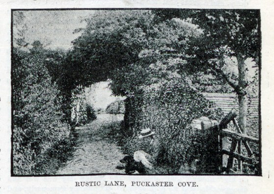 Black and white photograph of a rural lane captioned Rustic Lane Puckaster Cove