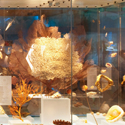 Colour photograph of a coral reef exhibition in the Natural History Museum